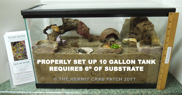 Properly Set Up 10 Gallon Crabitat