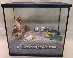 Properly setup hermit crab crabitat