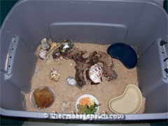 Large plastic bin used as a crabitat