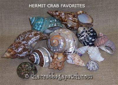 Hermit crab patch favorites